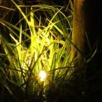 Spot in tuin bij avondlicht
