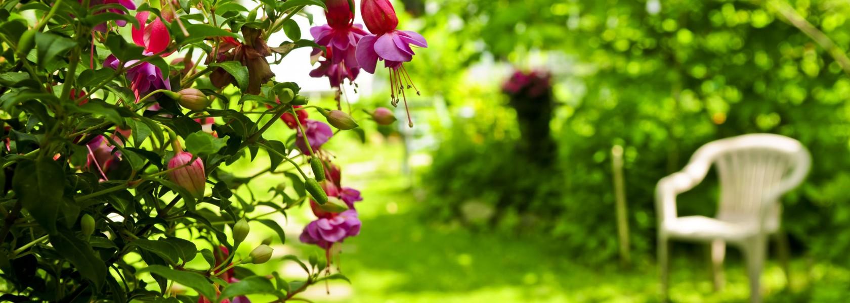 Plant in bloei van Dam Woerden